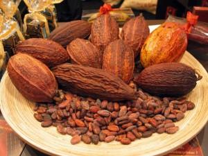 Reconocen a cacao chiapaneco como el más fino del mundo; lo consideran incomparable, fantástico y legendario. Foto: Especial.
