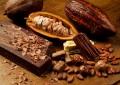 El cacao, un orgullo de México