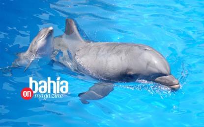 Dolphin Discovery celebra a lo grande su XIX aniversario
