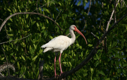 Riviera Nayarit, destino ideal para avistamiento de aves