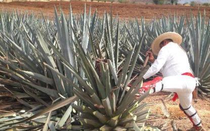 Tequila Sauza ahora será japonés