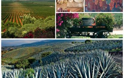 Se hermanan Ruta del Tequila y Ruta del Vino para fortalecer turismo