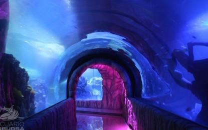 Inauguran el acuario más grande de México