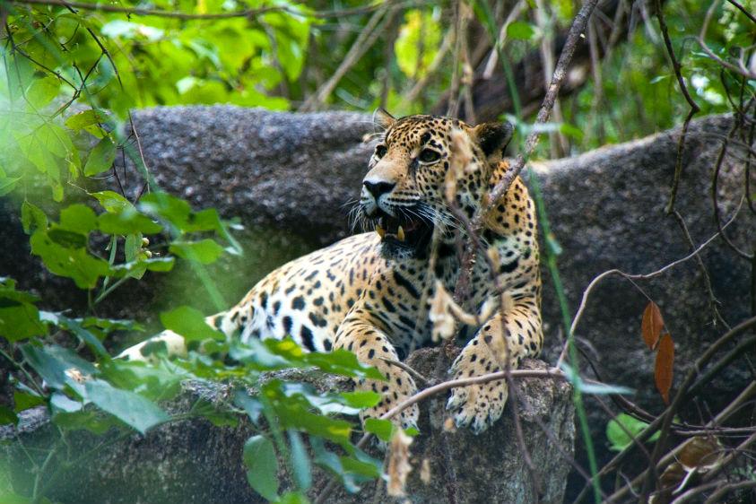 Bahia-Magazine_Ruta-Jaguar_Riviera-Nayarit