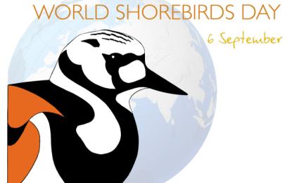 Participa Riviera Nayarit en el Conteo Mundial de Aves Playeras
