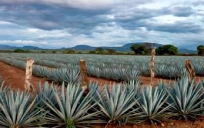 Reconoce China Denominación de Origen del Tequila