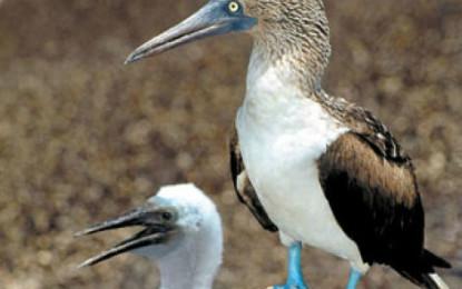 Anuncian Festival de las Aves en Lagunas Encantadas 2015