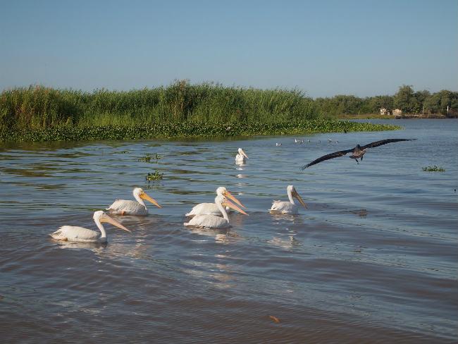 """El """"Birding"""" potencializa ecoturismo en Riviera Nayarit"""