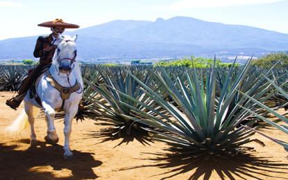 Será Tequila una ciudad inteligente