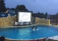 Dolphin Discovery Six Flags festeja su 6to. aniversario