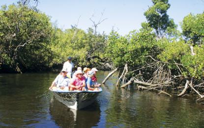 El mangle da valor ecológico y turístico a Riviera Nayarit