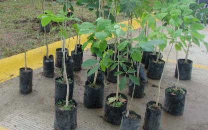 Se extiende reforestación en Riviera Nayarit; plantarán 2 mil árboles