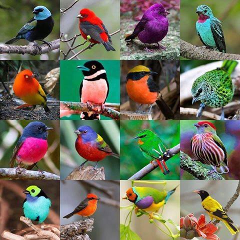 San Blas concentra un gran número de especies y tiene las mejores rutas de observación de aves en México, es por eso que este año además de las actividades ecoturísticas, se ofrecerá un gran programa cultural, artístico y académico con un enfoque ambiental.