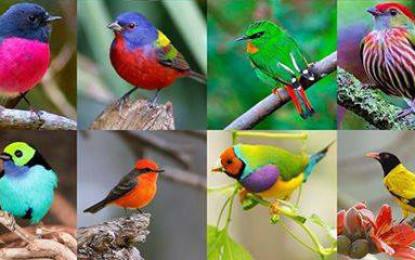 XII Festival Internacional de Aves Migratorias de San Blas