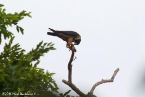 san-blas-avistamiento-aves