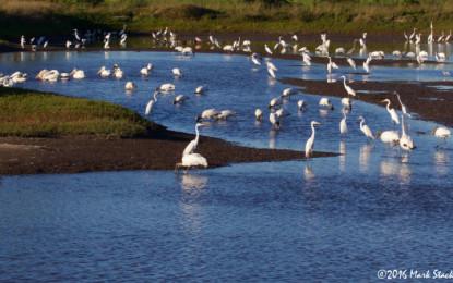 San Blas se consolida como destino de aves a nivel mundial