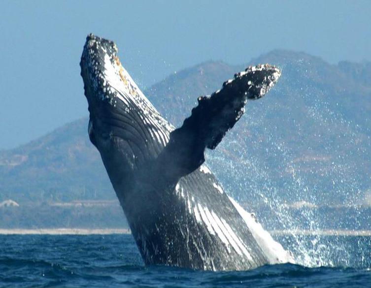 ballenas-ecobac