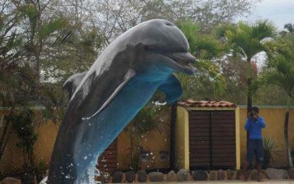 Ambientalistas de PV protestan por matanza de delfines en Japón