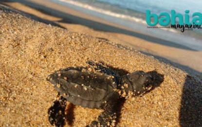 Tortuga marina, la eterna lucha por sobrevivir