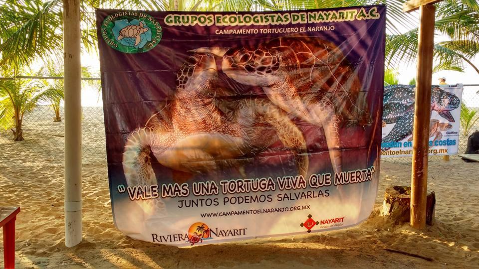 campamento-tortuguero-el-naranjo18