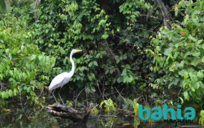 Festival de Aves Migratorias contribuye a la promoción turística de Nayarit: Secturnay