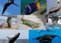 Con evento ¡Conoce Tu Bahía! buscan generar conciencia ambiental