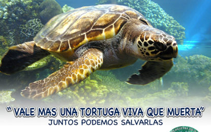 "5° Concurso de Dibujo ""Salvemos a la Tortuga Marina"""