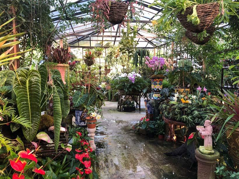 El Jardín Botánico de Vallarta está entre los 5 primeros jardines de Norteamérica