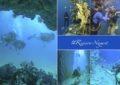 6 lugares increíbles para bucear en la Riviera Nayarit