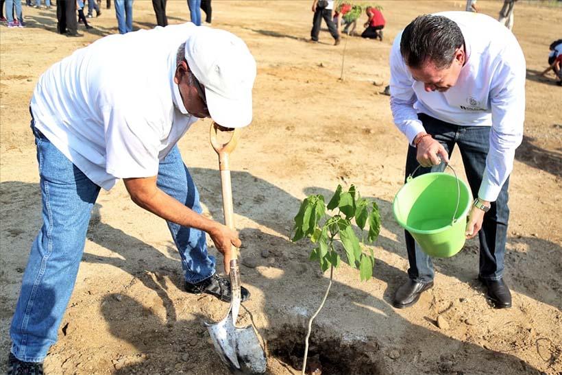 Sembrarán en Bahía más de 4 mil árboles