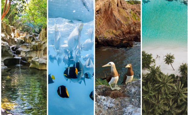 Riviera Nayarit promueve la conciencia y acción en favor del ambiente